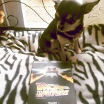 Pepper the Chihuahua, and our Back to the Future DVD collection