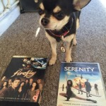 Chihuahua with Serenity and firefly DVD's