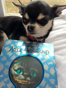 Chihuahua and DVD