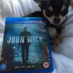 Chihuahua and John Wick Bluray