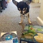 Chihuahua with Good Dinosaur Bluray and Cupcake making set