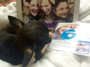 Chihuahua and Missing You Already DVD