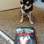 Chihuahua with DVD of Inanimate