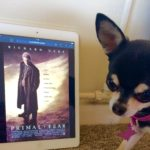 Chihuahua and the film poster for Primal Fear