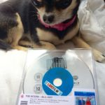 Chihuahua with The Intern BluRay