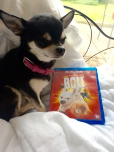 Chihuahua with Disney's Bolt on bluray