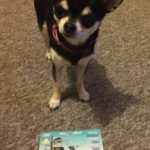 Chihuahua with Time Bandits on DVD