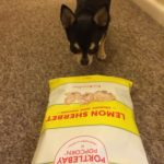 Chihuahua with Popcorn