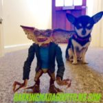 Chihuahua and Gremlin figure