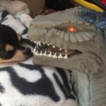 Chihuahua with Godzilla head toy