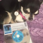Chihuahua with the Revenant on Bluray
