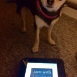 Chihuahua with Miss Peregrine's School for Peculiar Children book