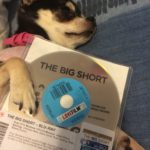 Chihuahua with the Big Short on DVD