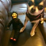 Chihuahua and puppet from the Saw films
