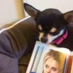 Chihuahua and image of Jodie Foster from The Accused