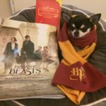 Is Fantastic Beasts as Magical as Harry Potter Was?