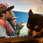 Did We Go Wild For Hunt For The Wilderpeople?