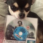 Chihuahua with DVD of The Legend of Tarzan