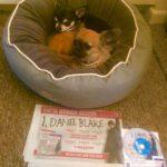 Chihuahuas with I, Daniel Blake