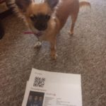 Chihuahua with ticket to see Life