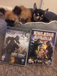 Chihuahuas with King Kong DVD