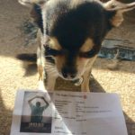 Chihuahua with our Belko Experiment cinema ticket