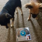 Teddy and Pepper, the chihuahuas with our In a Valley of Violence rental