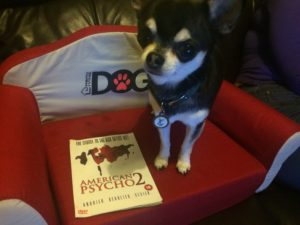 Chihuahua with American Psycho 2 DVD