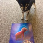 Chihuahua with poster for Sing