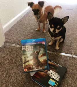 Chihuahuas with BluRays