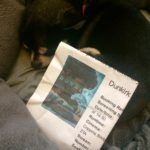 Chihuahua with Dunkirk film ticket