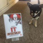 Chihuahua with It on DVD