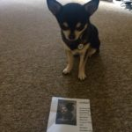 Chihuahua with Cinema Ticket for Mother!