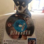 Chihuahua with Mindhorn DVD