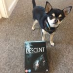 Chihuahua with the Descent on DVD