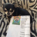 Chihuahua with our ticket to see Thor: Ragnarok