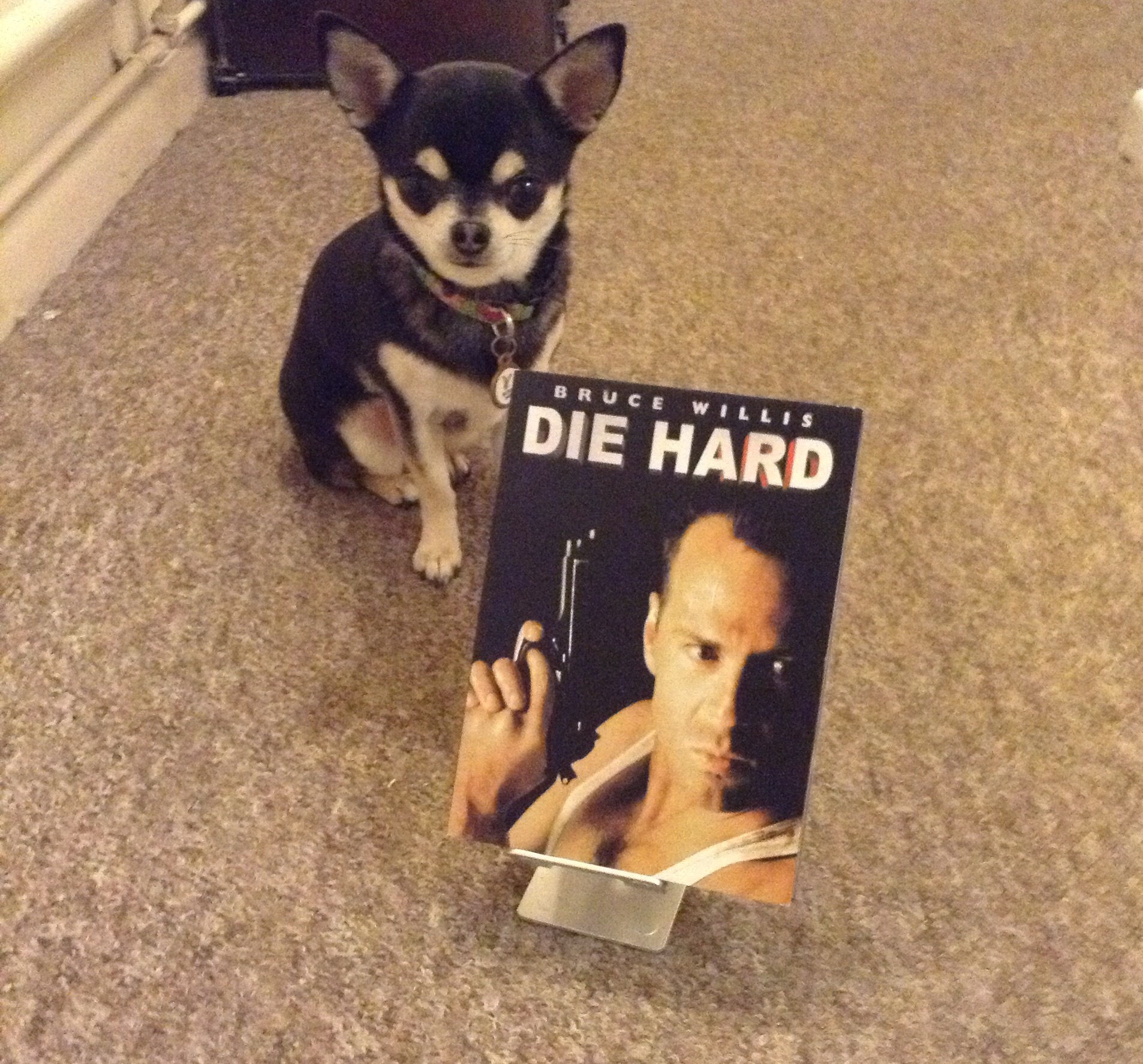 Chihuahua with Die Hard on DVD