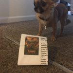 Chihuahua with Jumanji cinema ticket