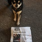Chihuahua with cinema ticket for the Commuter