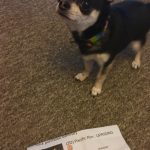 Chihuahua with Pacific Rim Uprising ticket