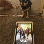 Chihuahua with Poster for Wonder