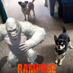 Review of Rampage starring the Rock