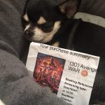 Chihuahua with an Infinity War Cinema Ticket