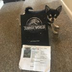 Chihuahua with poster for Jurassic World: Fallen Kingdom