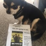 Chihuahua with Cinema ticket to see Sicario 2