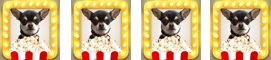 Chihuahua with cinema ticket for Slaughterhouse Rules