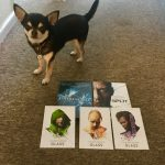 Chihuahua with DVDs