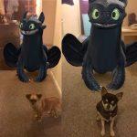 Chihuahuas with dragon