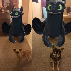 Chihuahuas with dragon
