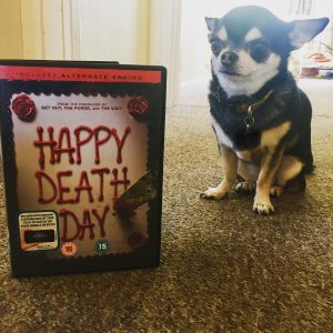 Chihuahua with Happy Death Day on DVD